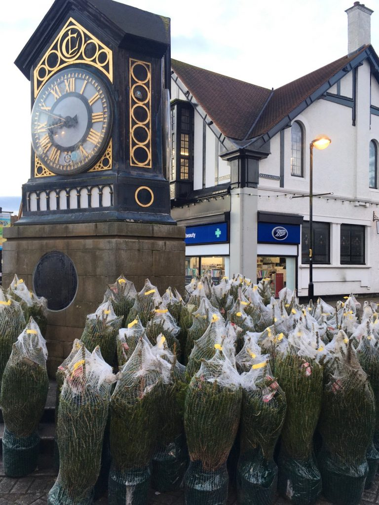 Christmas trees 2019 for Milngavie